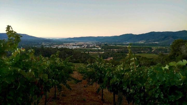 Cox Vineyards Update: 2016Harvest