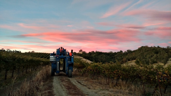 Cox Vineyards Update: 2016 Crop